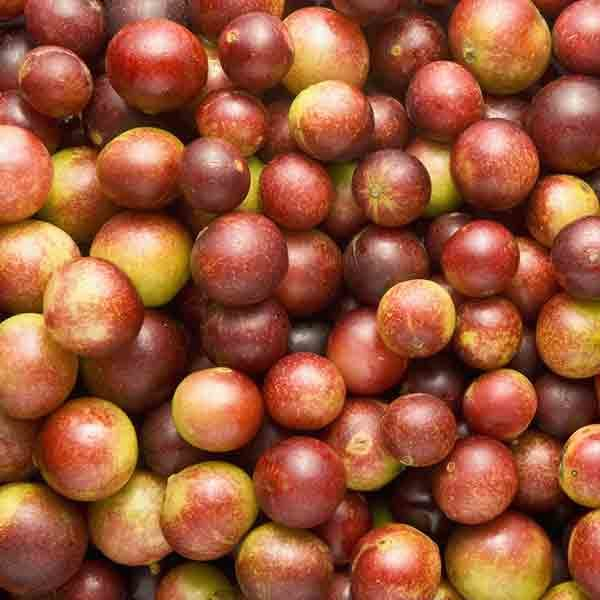 Camu Camu Fruit